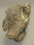 Eagle, a fragment from a Roman funerary monument