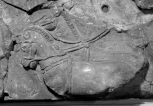 FRAGMENT: TWO HARNESSED HORSES WALKING LEFT